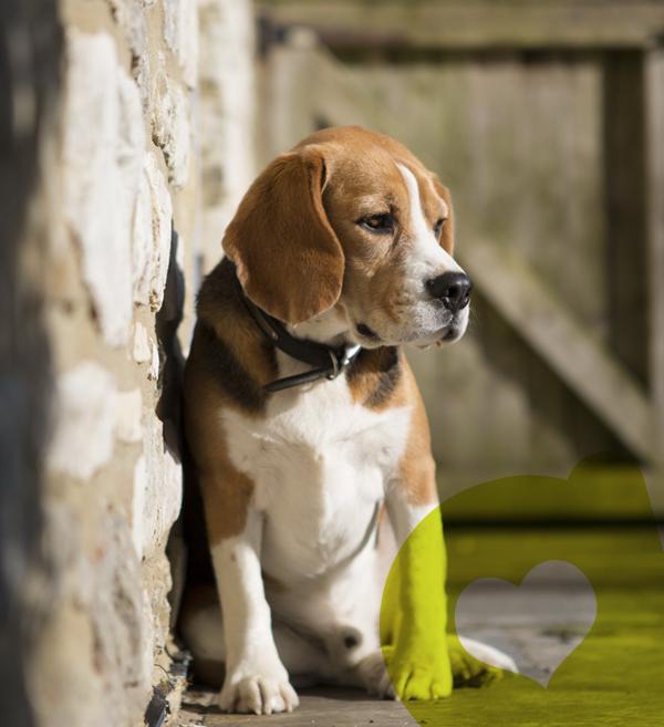perro-perdido-foto-web