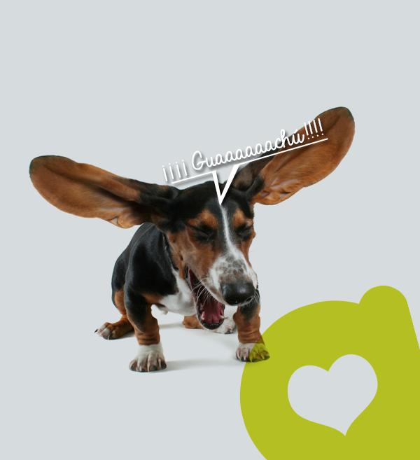 gripa-mascotas