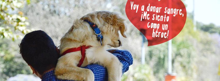 Perros que donan sangre